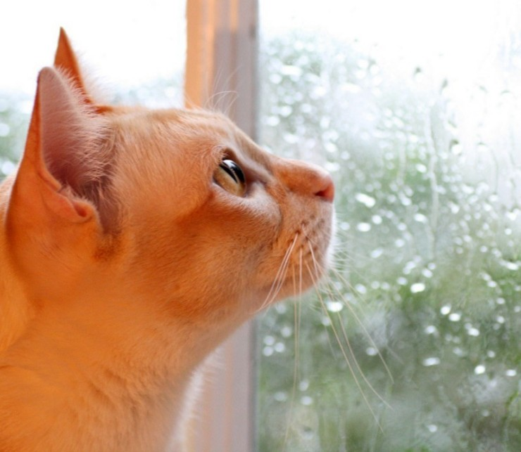 Трафарет, осень дождь картинки прикольные с надписями
