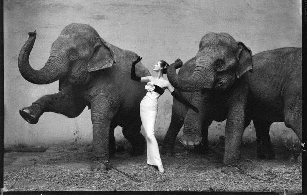 Dovima with the Elephants, Richard Avedon, 1955