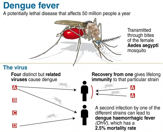 dengue-graphics
