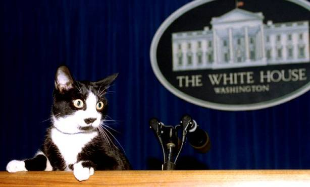 white-house-first-cat-socks
